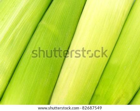 Green leaf corn background