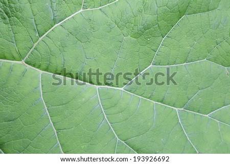 green leaf details background #193926692