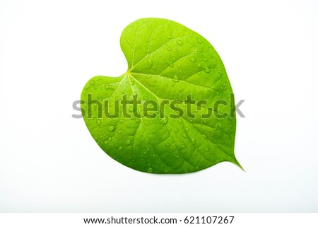 green leaf drops isolated on white background #621107267