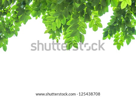 green leaf frame  and white  background - stock photo