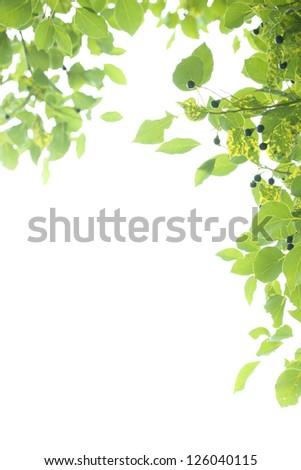 green leaf frame,element for designer