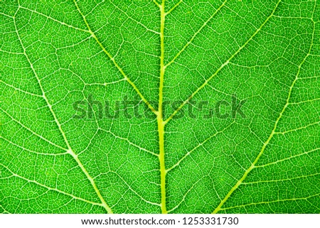 Green leaf fresh detailed rugged surface structure extreme macro closeup photo with midrib, leaf veins and grooves as a detailed and intricate pattern nature texture eco green biology background.