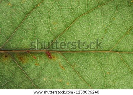Green leaf fresh detailed rugged surface structure extreme macro closeup photo with midrib, leaf veins and grooves as a nature texture eco green biology background.