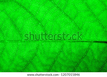 Green leaf fresh detailed rugged surface structure extreme macro closeup photo with midrib parallel to the frame and visible leaf veins and grooves as a natural texture eco green biology background.