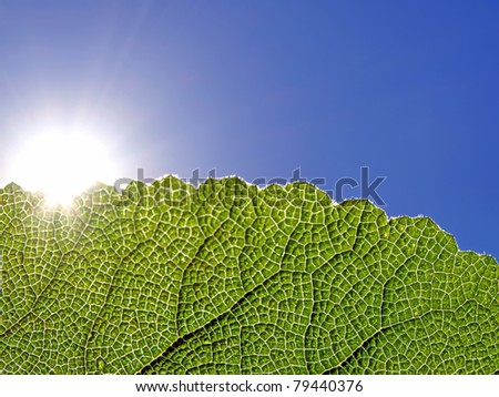 green leaf glowing in the sunlight against the blue sky.