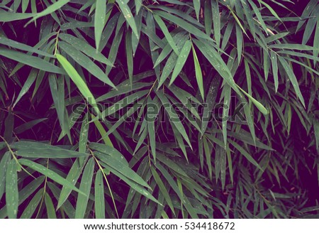 green leaf, Green leaves for background, Green leaves wall texture background #534418672