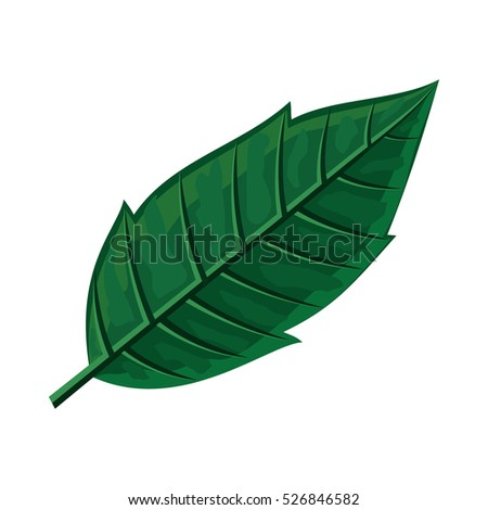 Green leaf  illustration. Flat design. Spring flowering and autumn trees defoliation. For nature concepts, plant infographic, icons or web design. Gardening growing. Isolated on white background