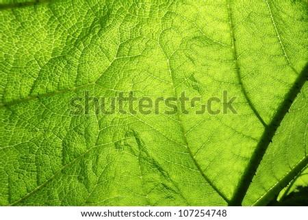Green leaf in a close up