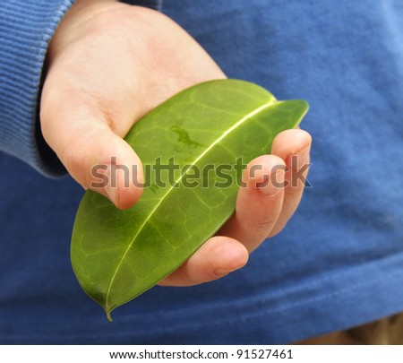 green leaf in childs hand - stock photo