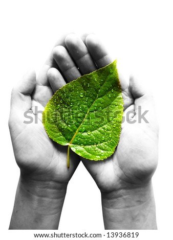 green leaf in female hands