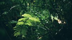 green leaf in garden, nature scene with green plant board leaf in garden