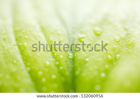 Green leaf in shallow focus with water droplets.