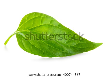 Green leaf isolated #400744567