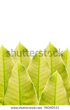 Green leaf isolated in green nature