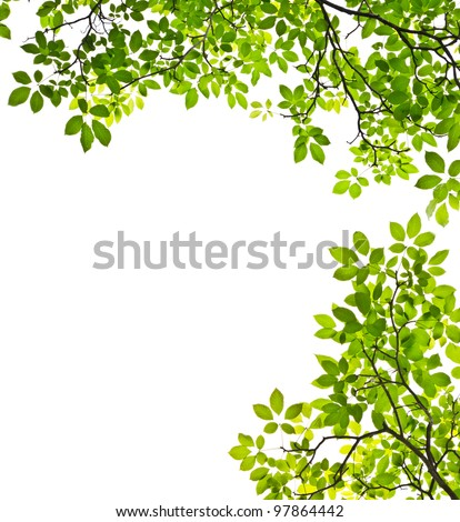 green leaf isolated on white background #97864442