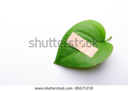 green leaf isolated on white showing broken nature ecology concept with band aid