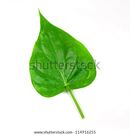 Green leaf isolated white background.