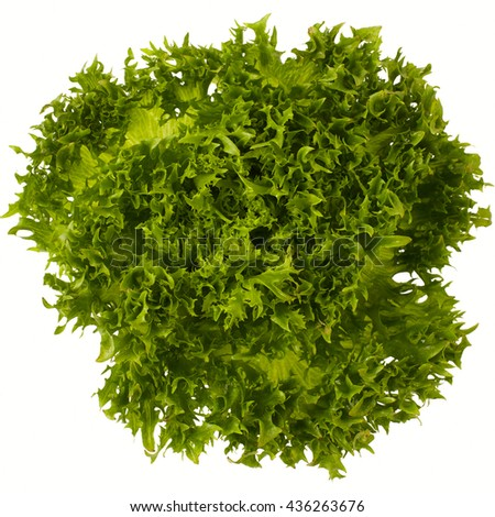 green leaf lettuce frisee on white background isolated closeup view #436263676