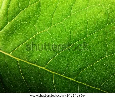Green leaf macro #145145956