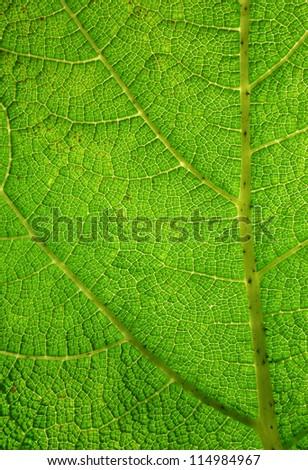 Green leaf macro close up. - stock photo