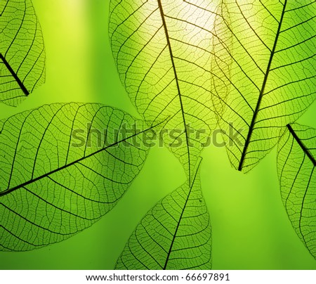 green leaf macro texture #66697891