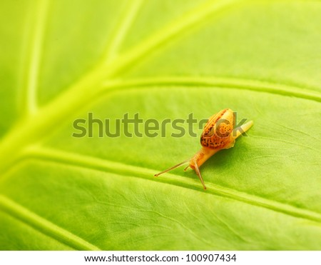 Green leaf natural abstract background with tiny snail, spring and summer nature, little wild creature, fresh forest flora, garden leaves