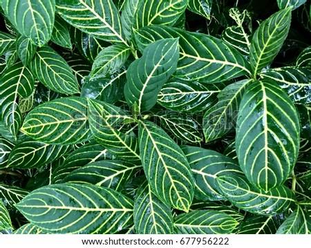 Green Leaf nature - Shutterstock ID 677956222