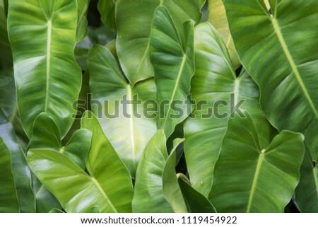 Green leaf nature background. #1119454922