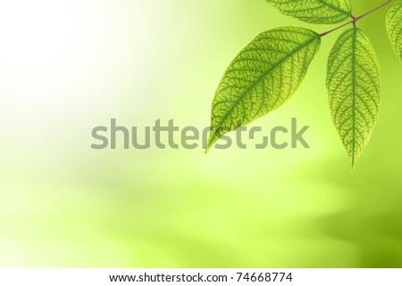 Green Leaf Nature Bokeh