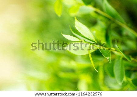 green leaf of nature view background on blure in garden at summer.Inspirational nature closeup using as background or wallpaper . #1164232576