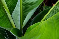 Green leaf of palm tree background. Grean leaf photo.