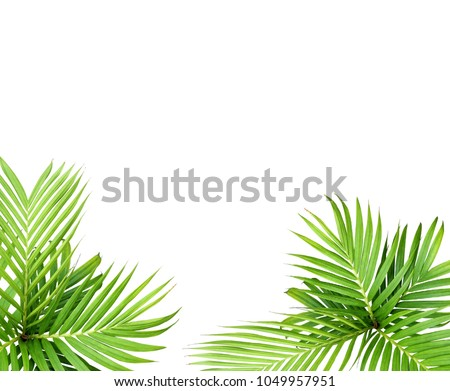 green leaf of palm tree isolated on white background #1049957951