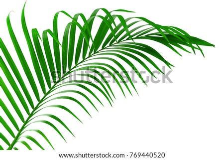 Green leaf of palm tree isolated on white background with clipping path #769440520