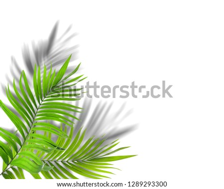 green leaf of palm tree with shadow on white background #1289293300