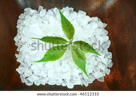 Green leaf of Parthenocissus in salt crystals. Spring spa therapy composition