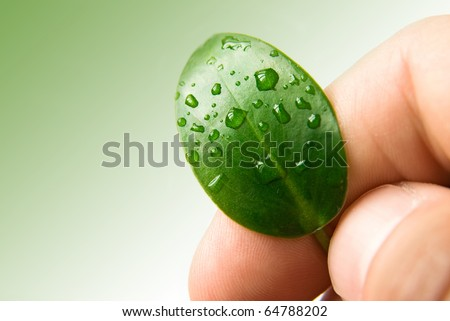 Green leaf of plant in hand, ecology background