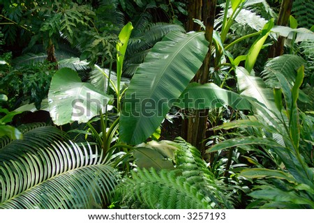 Green Leaf of Tropical Plant