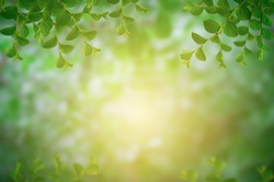 Green leaf on blurred greenery background.Beautiful leaf texture in sunlight.background natural green plants landscape, ecology.Closeup nature view with free space for text.Natural green background.