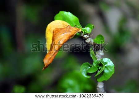 Green leaf on Isolated Background #1062339479