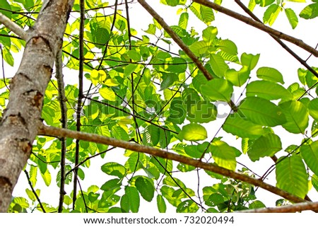 Green leaf on light #732020494