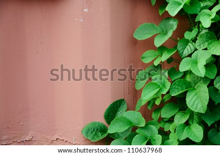 Green leaf on the pink-painted wall.