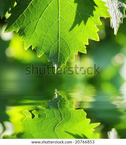 Green leaf over water reflection. Shallow DOF.
