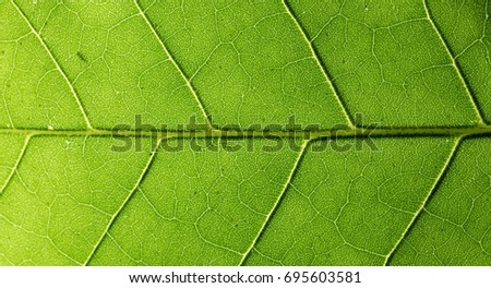 green leaf pattern background. #695603581