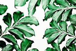 Green leaf pattern on white background