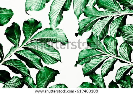 Green leaf pattern on white background #619400108