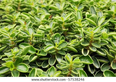 green leaf plant abstract - stock photo