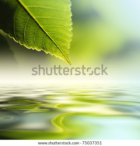 Green leaf reflecting in river water, closeup. Copyspace.