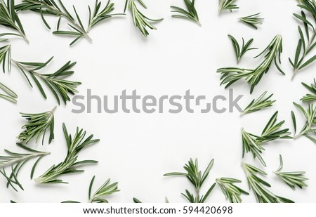 green leaf rosemary on white background. flat lay, top view.abstract