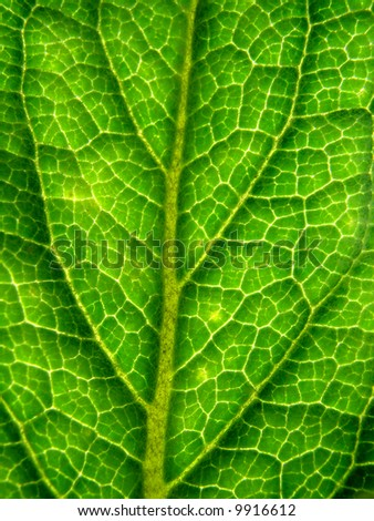 Green leaf structure close up