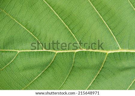green leaf texture #215648971
